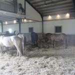 Allevier de paarden vonden een dagje binnen met onbeperkt hooi, geen probleem !