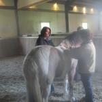 samen een paard behandelen