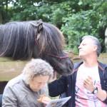 Zelfs de cursisten die nog nooit iets met een paard hadden gedaan vonden het contact met de ijslanders geweldig.....