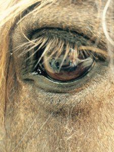 Samenwerking mét het paard