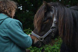 paard en mens, blijft mooi